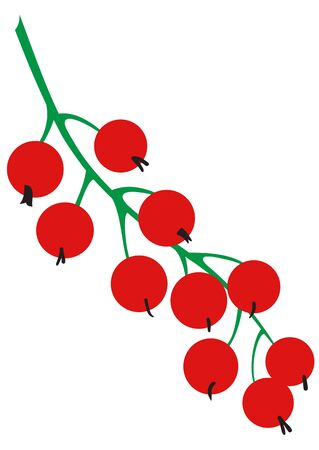 Illustration of sprig of ripe red currant on a white background Illustration
