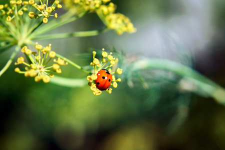 Ladybug on a plant on a blurred background
