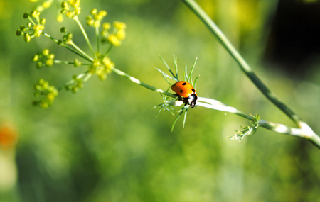 Ladybug on a plant on a blurred background in a sunny day Stock Photo