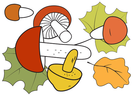 Illustration of mushrooms with autumn leaves on a white background