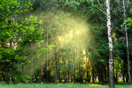 Landscape from warm sunlight shining through trees Stock Photo