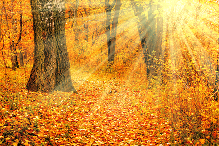 A saturated yellow-red autumn landscape in the suns rays