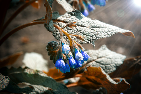 A bush of beautiful blue flowers in sunbeams Archivio Fotografico - 126202440
