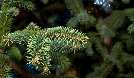Spruce branch close up on a blurred background with tinsel Archivio Fotografico - 126202443