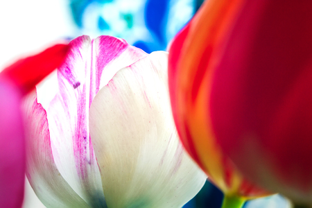 Abstract blurred colorful background of floral elements Archivio Fotografico - 126202416
