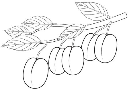 Illustration of the outline of a branch with plums Archivio Fotografico - 126202427