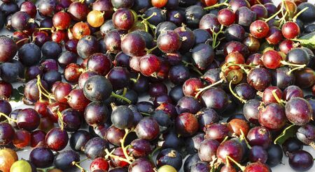 Background of ripe gooseberries and currants close up