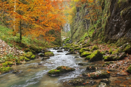 Galbena canyon autumn in Transylvania photo