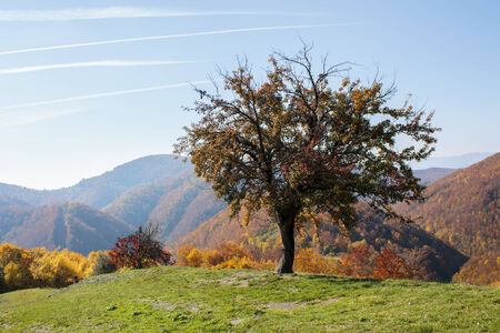 singular: Lonely tree on a hill in Transylvania Stock Photo