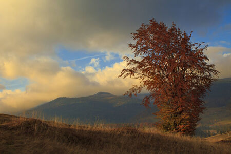 singular: Lonely tree on a hill in Transylvania