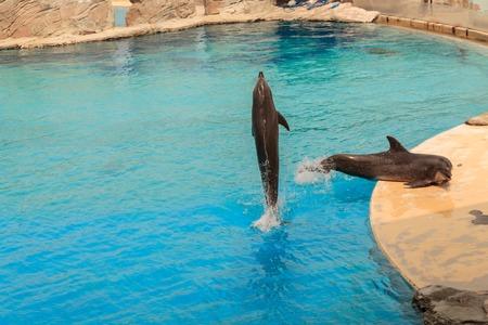 intelligent: Intelligent dolphin in the dolphinarium