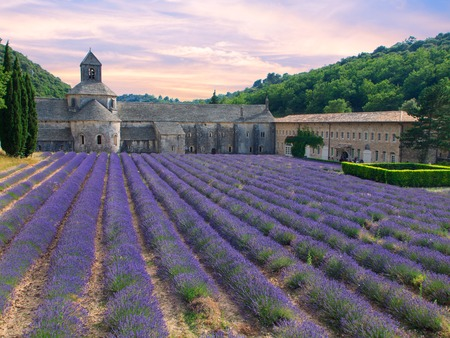 lavande: Abbey of Senanque with lavender field in Provence, France