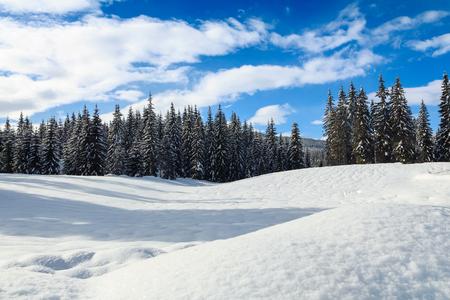 슬로베니아 산에 눈이 덮여 나무와 아늑한 겨울 장면 스톡 콘텐츠