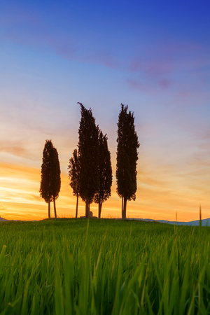 the arable land: Cypress trees typical Tuscany landscape springtime at sunrise in Italy,Europe