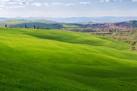 san quirico: Typical Tuscany landscape, green hills springtime in Italy,Europe Stock Photo