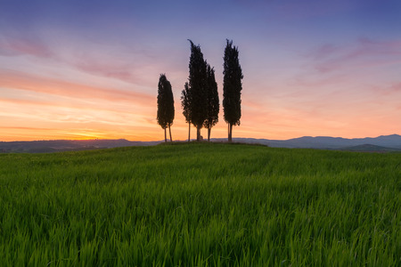 Cypress trees typical Tuscany landscape springtime at sunrise in Italy,Europe