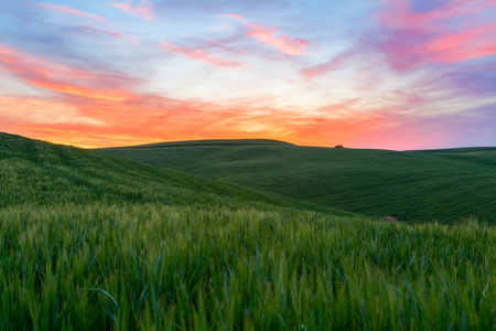 pienza: Typical Tuscany landscape springtime at sunset  in Italy,Europe Stock Photo
