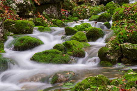 bohinj: Mountain creek in the autumn forest in Triglav national park in Slovenia