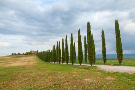 pienza: Tuscany landscape, beautiful green hills and cypress tree row springtime in Italy,Europe Stock Photo