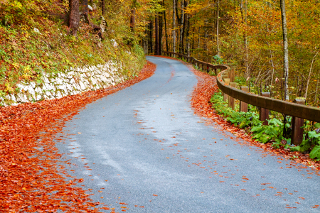 Winding forest road in beautiful autumn colors near Bohinj lake in Slovenia Stock Photo
