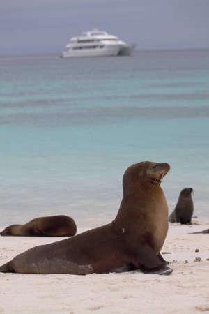 galapagos: Sea lion on Galapagos island Stock Photo