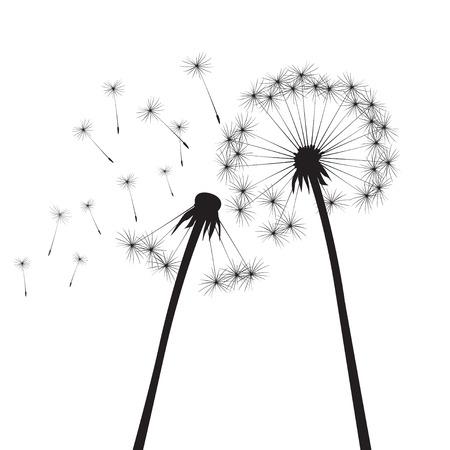 overblown: Black vector dandelions