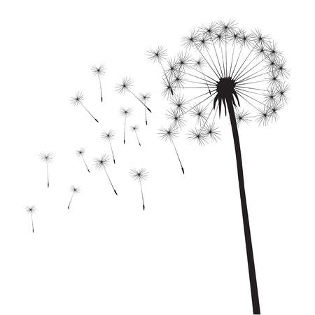 Black vector dandelion Illustration