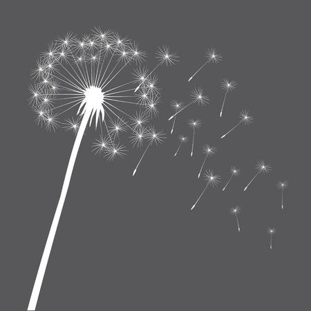 posterity: Vector white dandelion Illustration