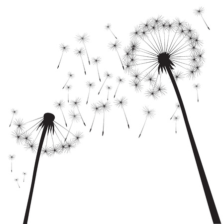 overblown: Black vector dandelion Illustration