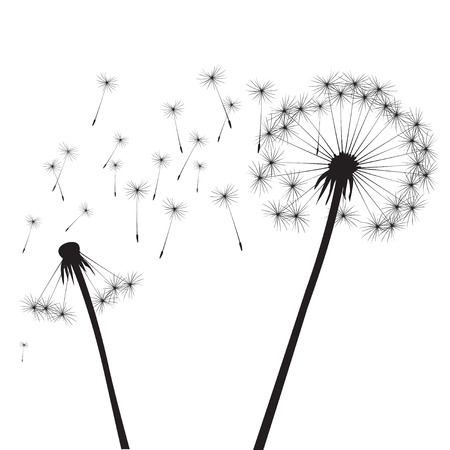overblown: Black vector dandelion Illustration