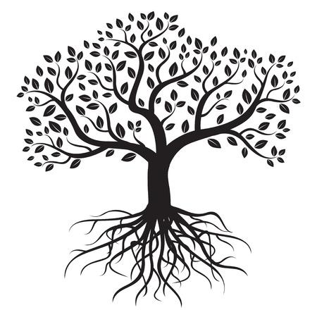 arboles blanco y negro: Vector árbol con raíces y hojas. Vectores