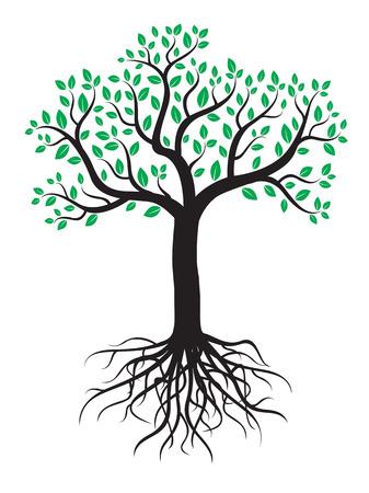 planta con raiz: Vector árbol con raíces y hojas. Vectores