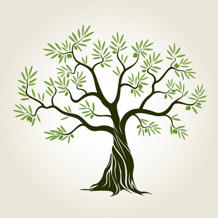 Olive tree with leafs. Vector Illustration. Ilustrace