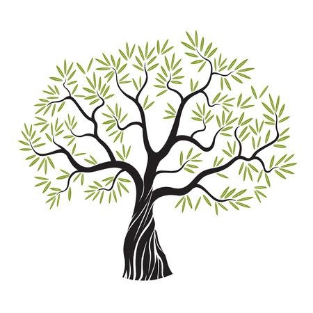 hoja de olivo: Olivo con hojas. Ilustración del vector. Vectores
