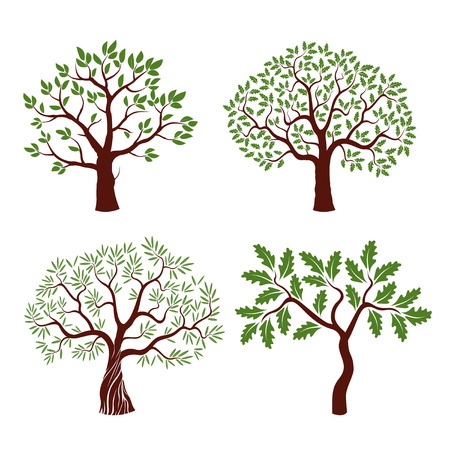 Set of color tree with leafs. Vector Illustration. Vettoriali