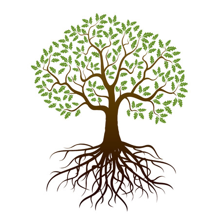 single tree: Oak Tree and Roots. Vector Illustration.