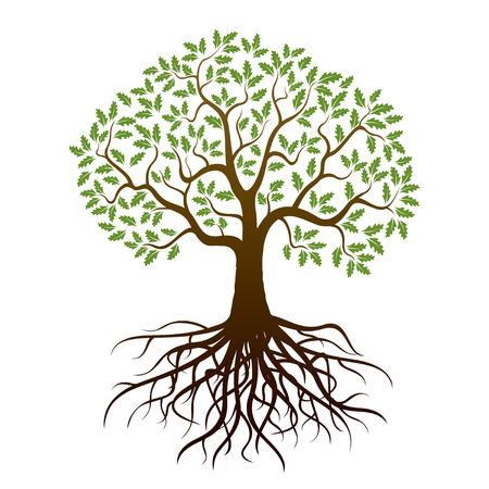 imagen: Árbol de roble y raíces. Ilustración del vector.