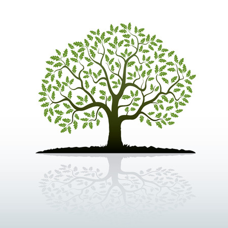 solitary tree: Oak Tree. Vector Illustration.