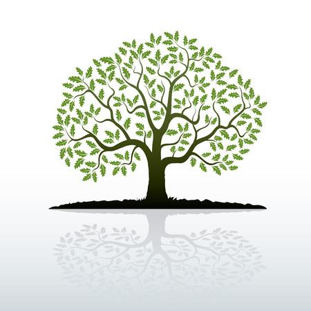 arbol raices: Roble. Ilustración del vector.