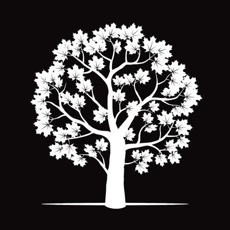maple tree: Maple Tree. Vector Illustration. Illustration