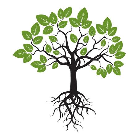 Árbol de hojas verdes y raíces.