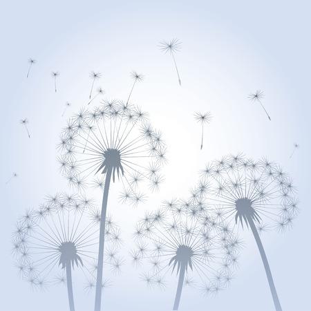 posterity: Dandelions in Background