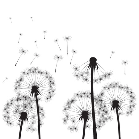 posterity: Black Dandelions