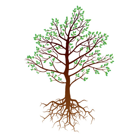 roots: Color Tree and Roots. Vector Illustration. Illustration