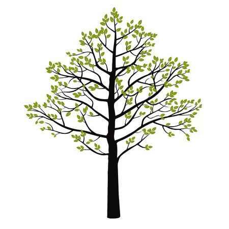 Boom en groene bladeren. Vector Illustratie.