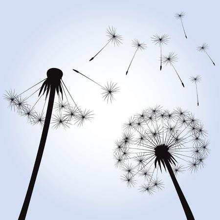 posterity: Illustration of Dandelions and Light. Illustration