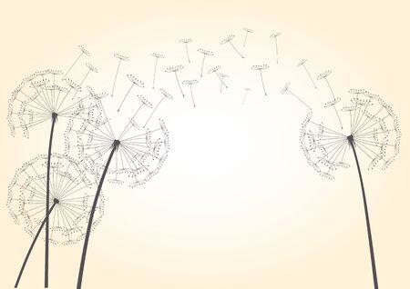 plant delicate: Illustration of Dandelions and Light. Illustration