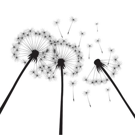 dandelions: Illustration of Black Dandelions.