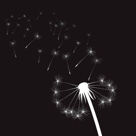 plant delicate: White vector Dandelions Illustration