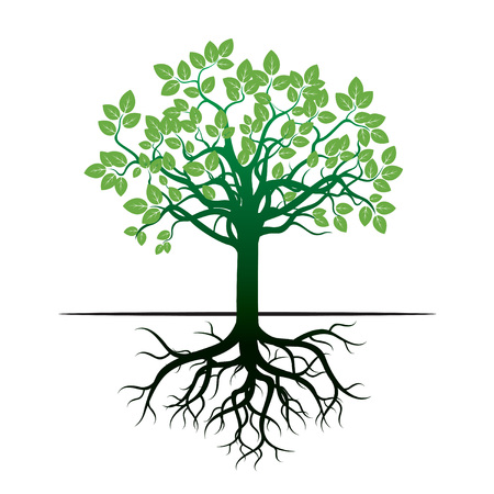 root: Green Tree and Roots. Vector Icon.